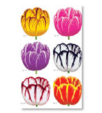 Long Matches Tulip Set of 3