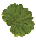 Round Placemats Leaves