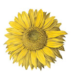 Round Placemats Sunflower