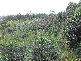 Superior Nut Co. Carbon-offset forrest in Costa Rica