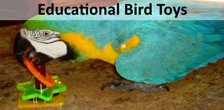 Educational and Trick Training Bird Toys at FunTime Birdy