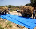 Agriculture Tarps