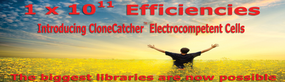 Genlantis Introduces The Highest Efficiency Electrocompetent Cells Ever!