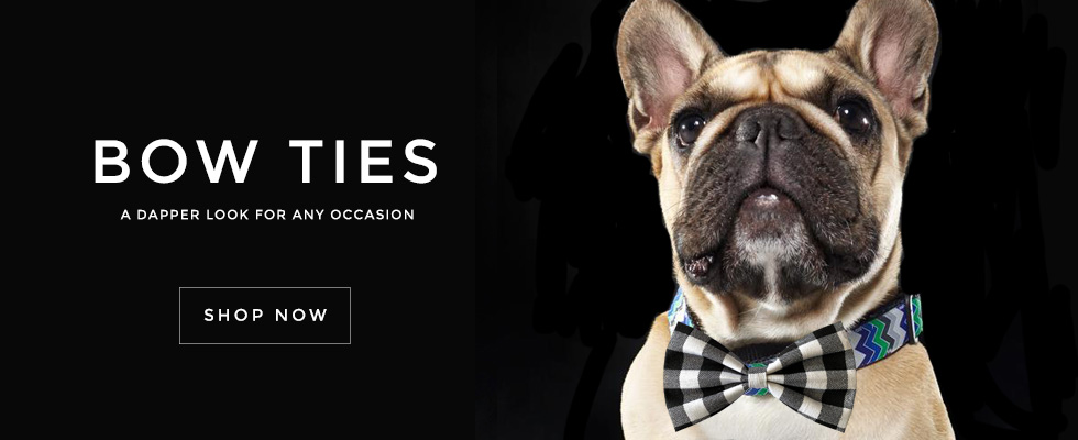 Welcome to GwenGear SF. Trendy, Hip Pet, Dog, Cat Collars. Bow Ties for Dogs.