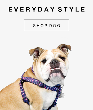 Gwen Gear San Francisco Hand Made Trendy, Cool Designer Dog Collars. Includes Treat, our best-selling Cupcake Dog Collar.