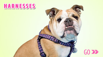 Gwen Gear San Francisco Trendy Nylon Dog Harnesses.