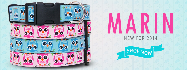 Introducing Marin! Adorable on trend Owl Dog Collars in Pink and Blue!