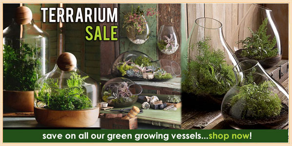 Terrarium Sale at Pop Deluxe