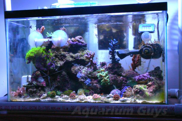 10 Gallon Nano Reef