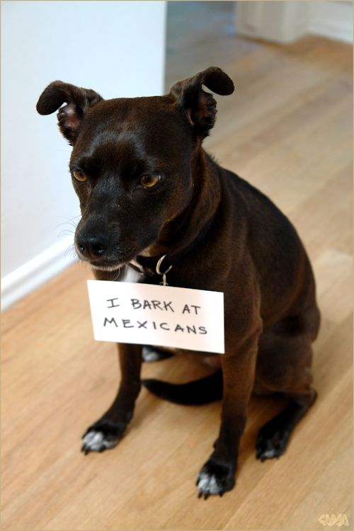 dog shamming pic