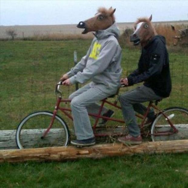 Horse mask funniest photos
