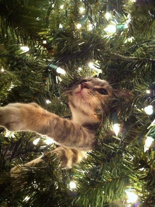 cat in Christmas tree