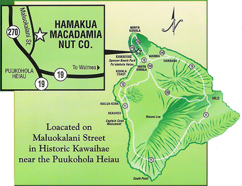 Where To Visit Macadamia Nut Farms In Hawaii Go Visit Hawaii