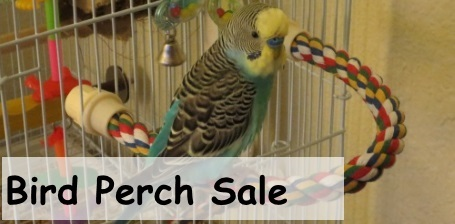 Bird Perches on Sale at FunTime Birdy