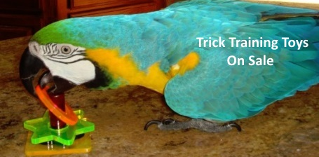 Educational and Trick Training Bird Toy Sale