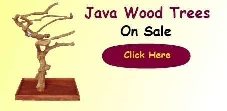 Java Wood Trees on Sale