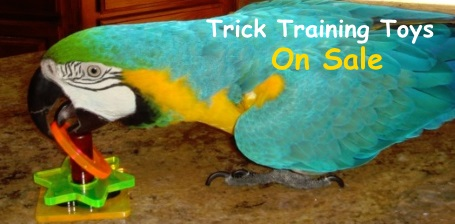 Bird Trick Training Toys on Sale at FunTime Birdy