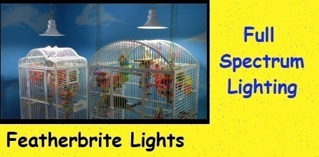 Featherbrite Lights on Sale at FunTime Birdy