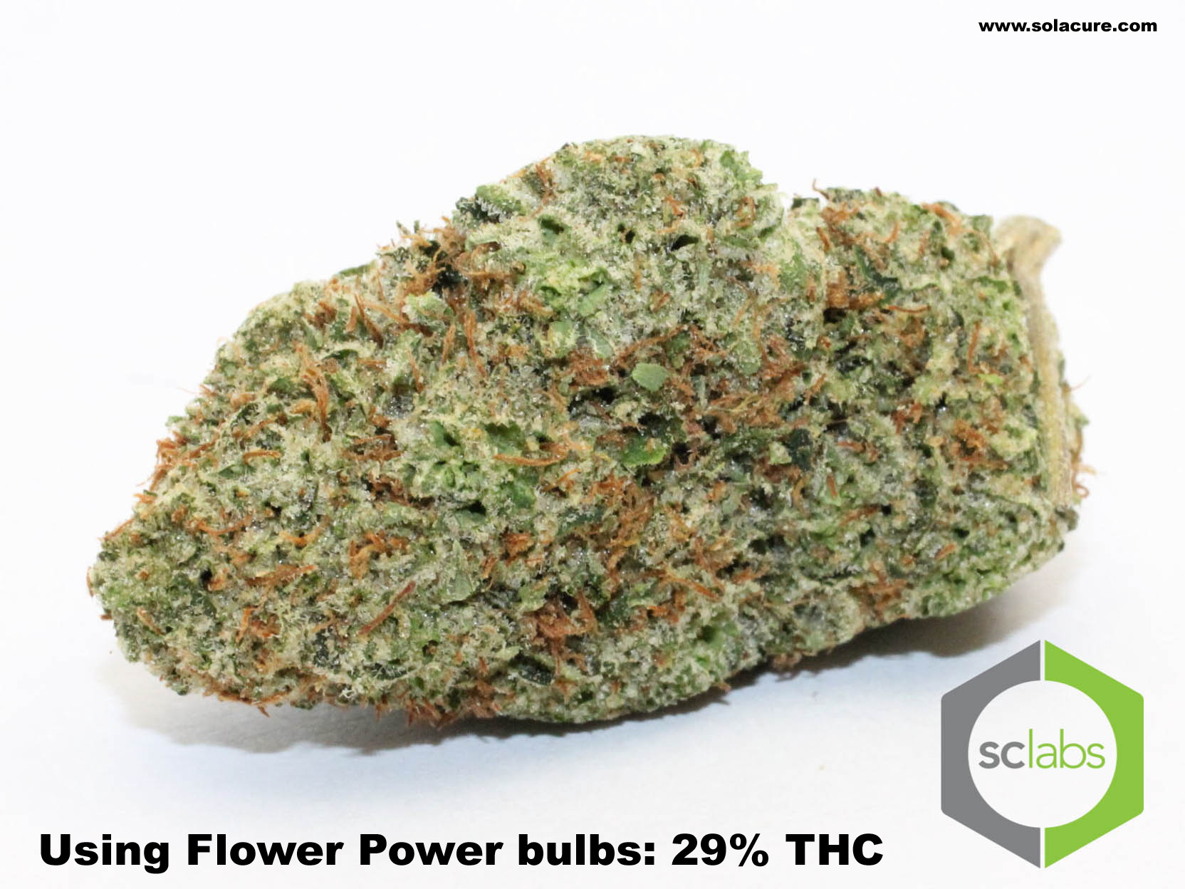 With Flower Power 29% THC
