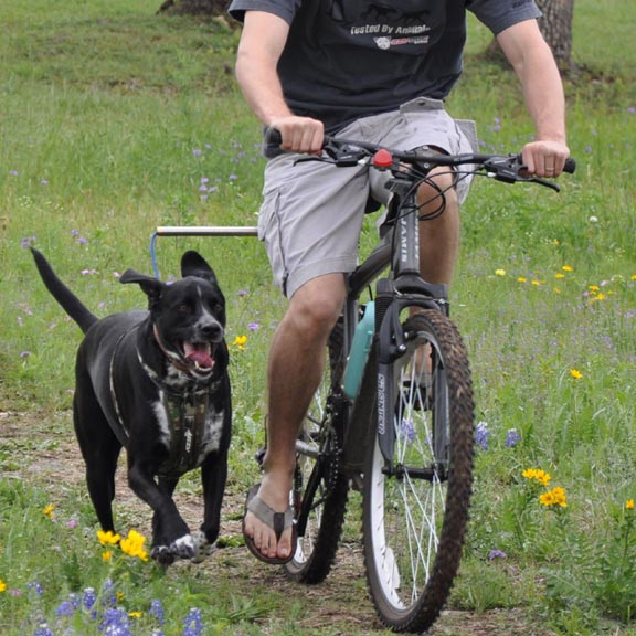Dog Bike Leash