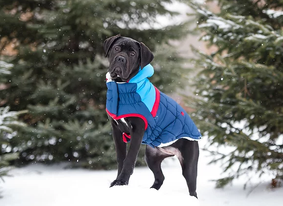 Best Dog Winter Coat GF Pet Trekking Parka