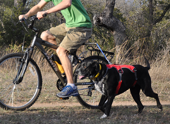 Dog Biking Harnesses