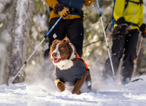 Ruffwear Cloud Chaser