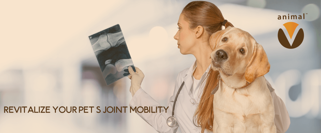 Revitalize Your Pet Joint Mobility