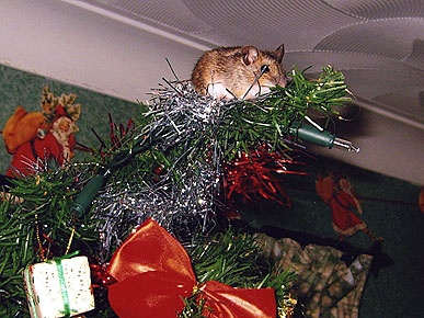mouse tree topper
